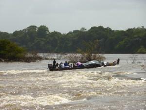 Le saut hermine, Guyane